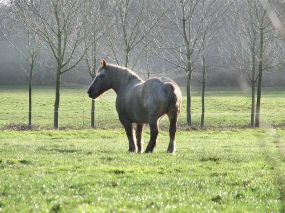 馬革の使いみちの画像