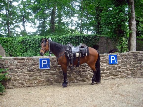 馬具を嵌めている馬