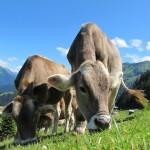 あなたの知らない牛革の世界