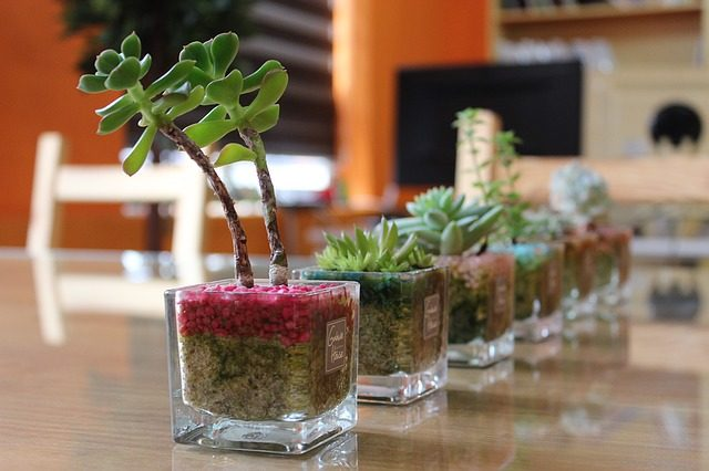 小さい財布の話なので小さい観葉植物でも!