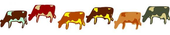 牛も色々種類があるんですよ