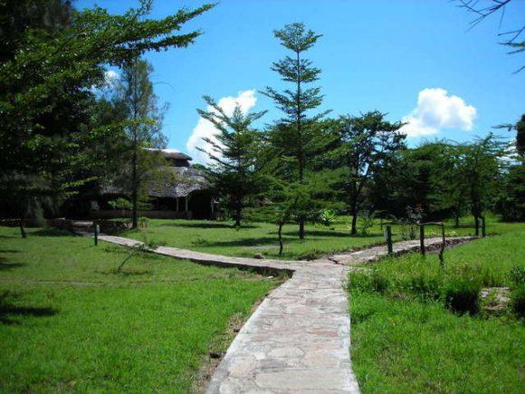 サファリパークのイメージ