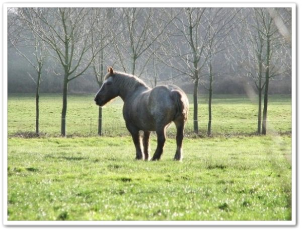 遠くを見ている馬